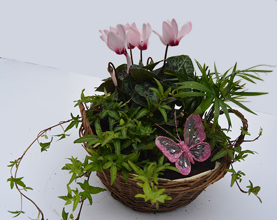 Simply Flowers Planted Basket 2