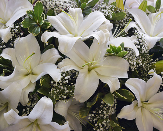 Casket Top Lilies Funeral Tribute