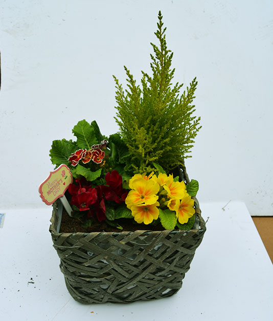 Mothersday Flowers - Weaved Planters