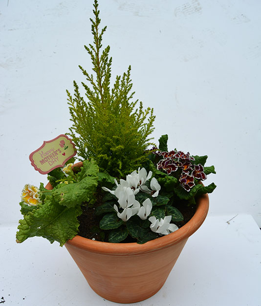 Mothersday Flowers - Terracota Planters