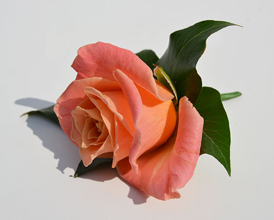 Wedding Buttonholes Orange & White Roses